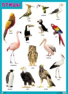ПЛ Птицы