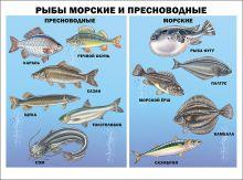 Рыбы морские и пресноводные (плакат)