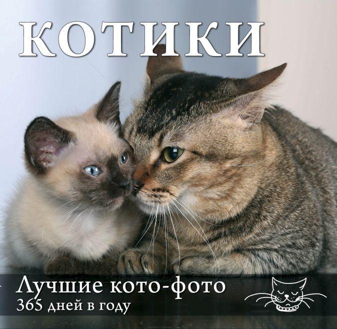 Календарь. Котики: Лучшие кото-фото. 365 дней в году (оформление 2)