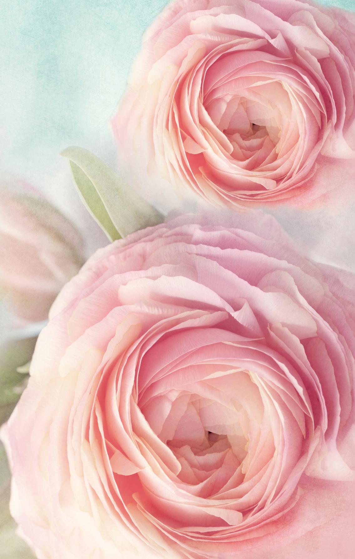 Блокнот. Розы эффективный дели 100 00 393 г контактный цилиндра