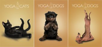 Тетр 48л скр А4 кл YD23/3-ЕАС твин УФ Yoga Dogs