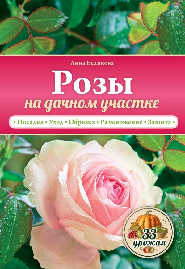 Розы на дачном участке Белякова А.В.