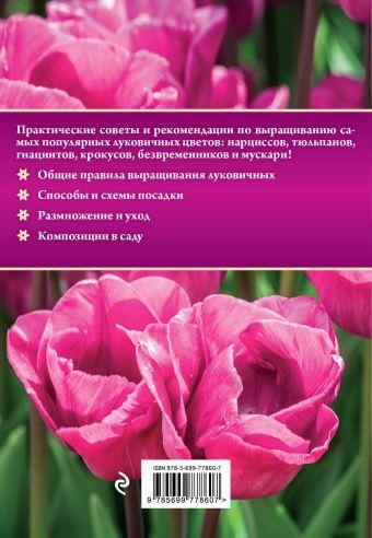 Луковичные цветы Анна Белякова
