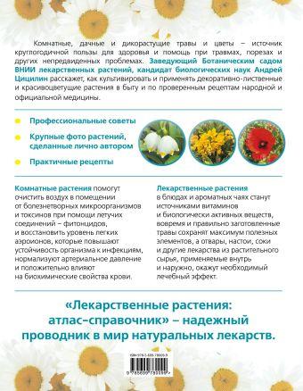Лекарственные растения: Атлас-справочник А. Цицилин