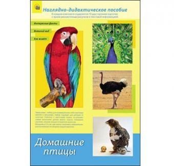 ДИДАКТИЧЕСКОЕ ПОСОБИЕ. формат А4. ДОМАШНИЕ ПТИЦЫ (Арт. ПД-1773)