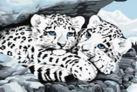 Набор для хобби и творчества Живопись на холсте. Размер 30*40 см.. Снежные леопарды (049-CE )