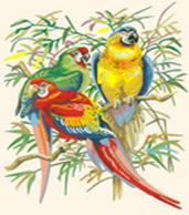 Набор для хобби и творчества Живопись на холсте. Размер 30*40 см.. Тропические попугаи (245-CE )