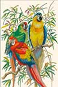Наборы для вышивания. Тропические попугаи (4164-14 )