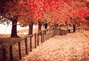 Живопись на холсте.Размер 40*50 см.. Осенняя пора (534-CG )