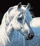Набор для хобби и творчества Живопись на холсте 30*40 см. Белая лошадь (230-CE)