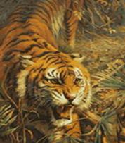 Живопись на холсте 40*50 см. Свирепый хищник (313-CG)