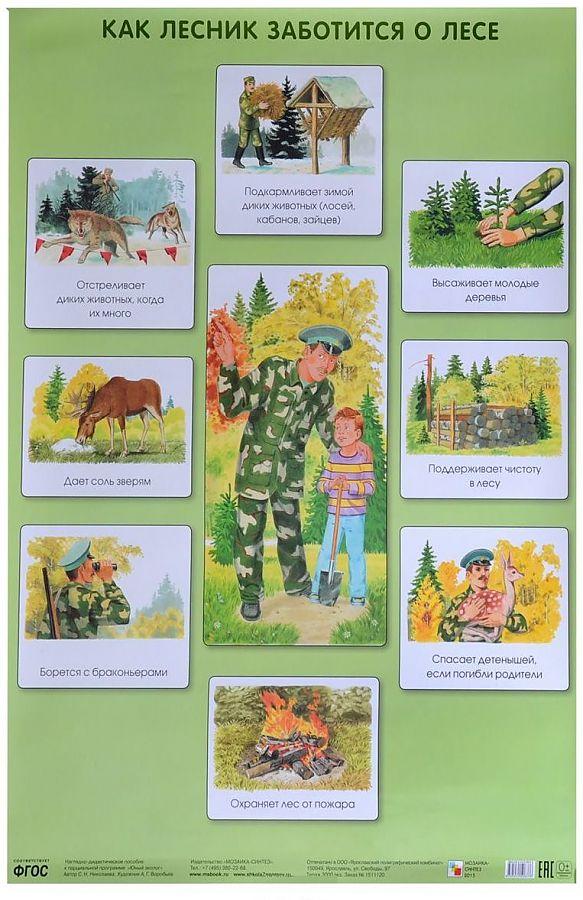 ПЛ Как лесник заботится о лесе Николаева С. Н