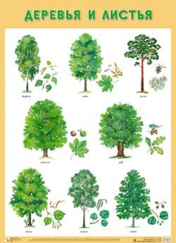 ПЛ Деревья и листья Нафиков Р.