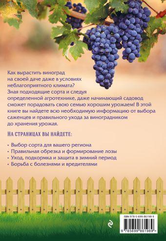 Виноград. Урожайная лоза (нов.оф) Анна Белякова