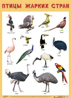 ПЛ Птицы жарких стран