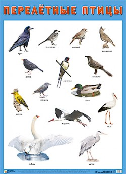 ПЛ Перелетные птицы