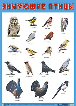 ПЛ Зимующие птицы
