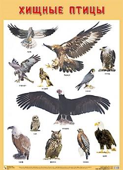 ПЛ Хищные птицы