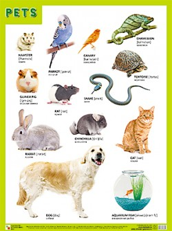 Плакаты (англ). PETS (Домашние питомцы)