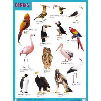 Плакаты (англ). BIRDS (Птицы)