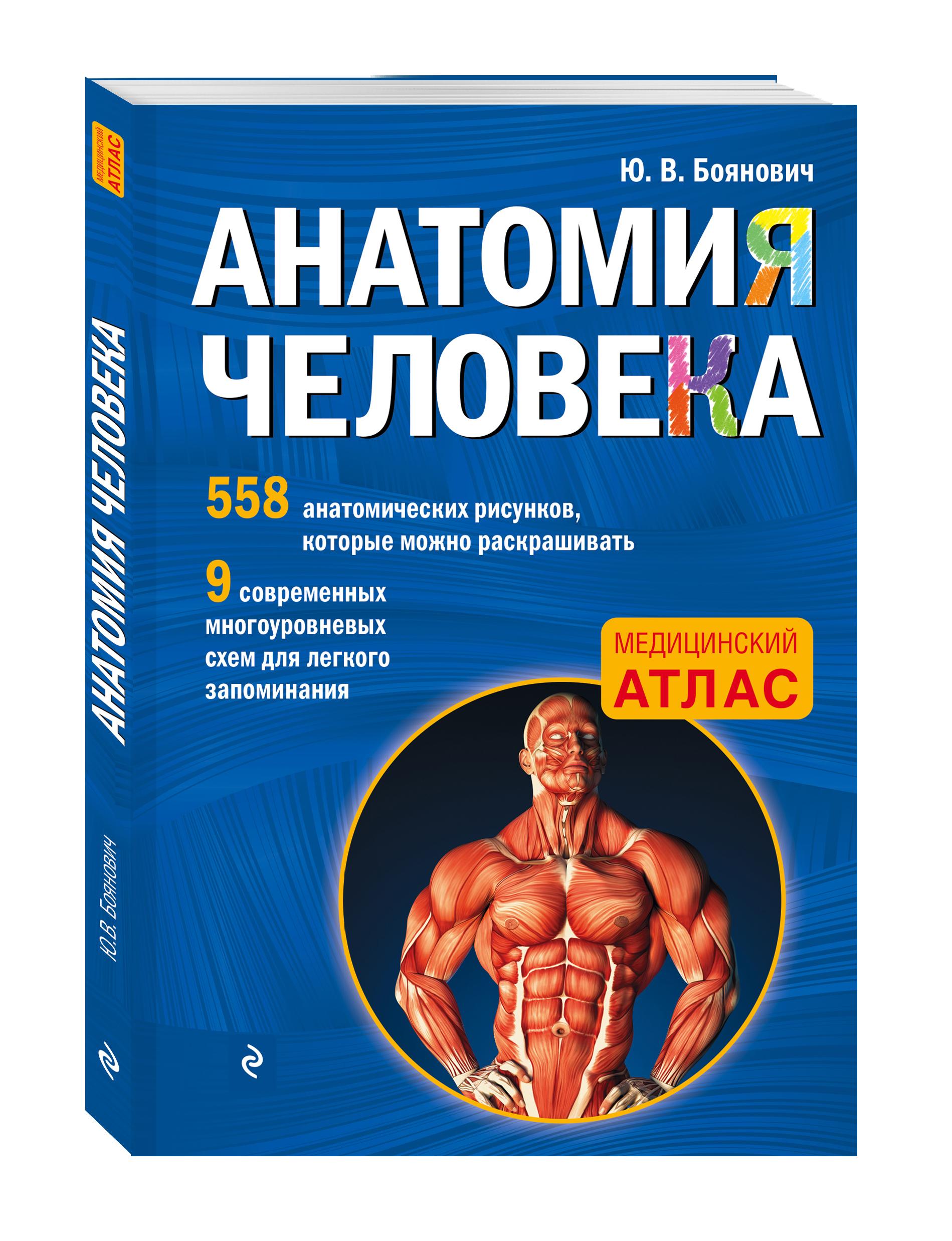 Боянович Ю.В. Анатомия человека со страницами для раскрашивания анатомия человека русско латинский атлас