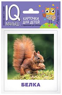 Умный малыш .  Кто живёт в лесу? Набор карточек для детей. Ходюшина Н.П.