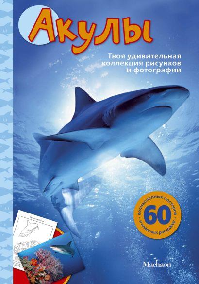 Акулы - фото 1