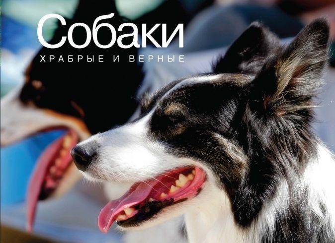 Хосанг Ф. - Собаки. Храбрые и верные обложка книги