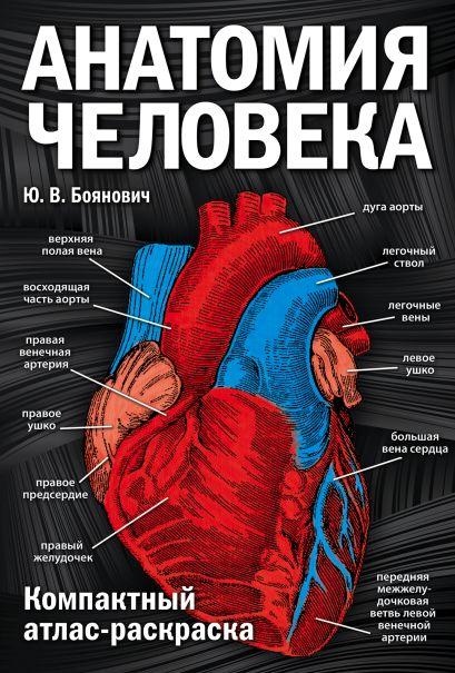 Анатомия человека: компактный атлас-раскраска - фото 1