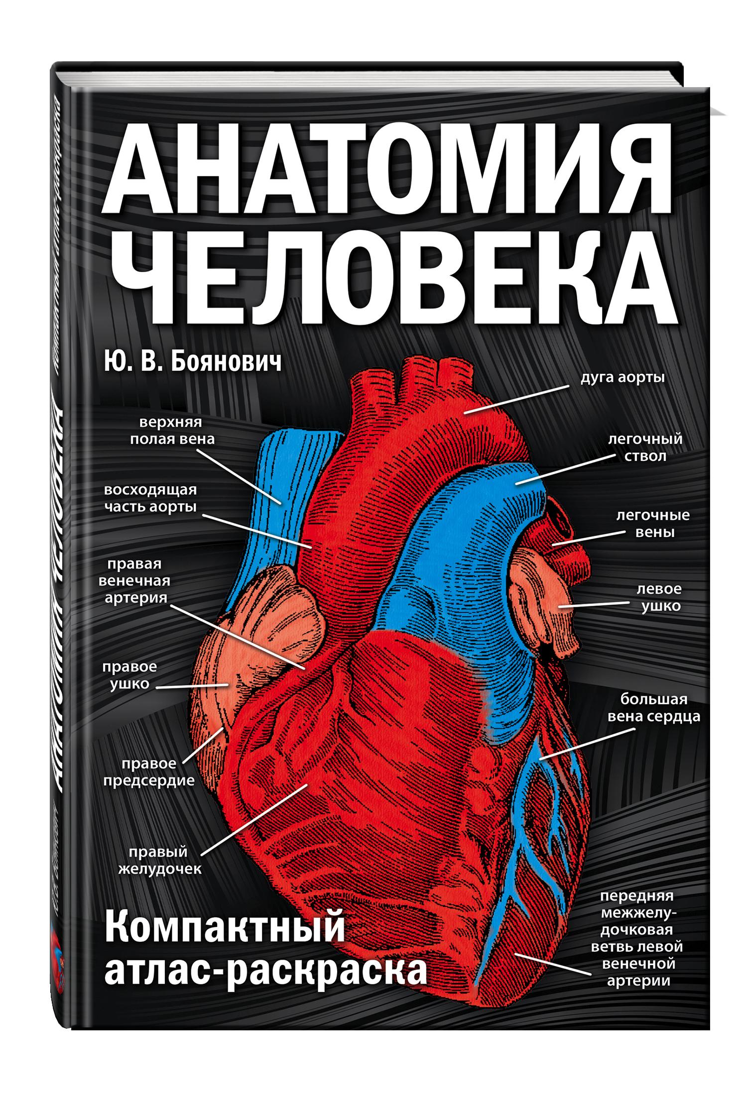 Ю. В. Боянович Анатомия человека: компактный атлас-раскраска ю в боянович анатомия человека компактный атлас раскраска