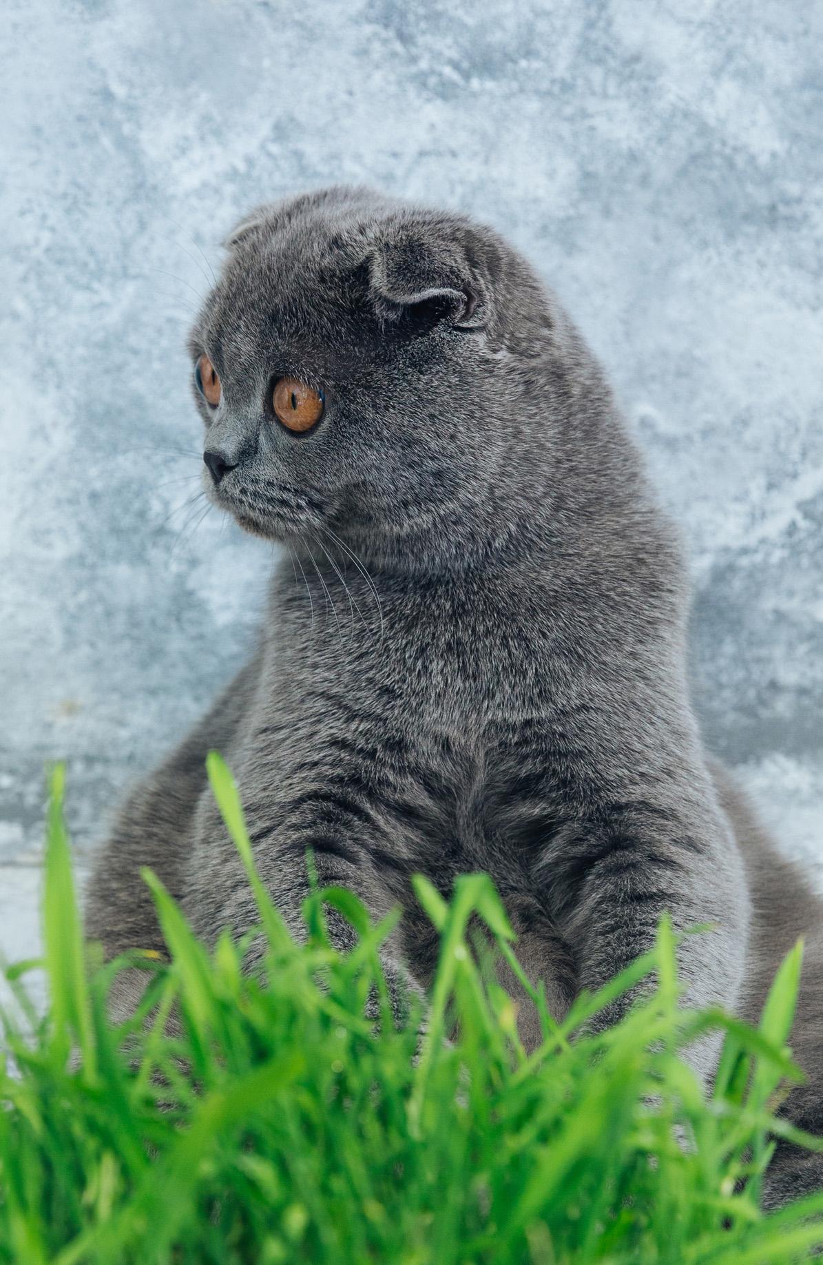 Shocked Cat (А5)
