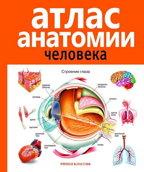 Марысаев В.Б. Атлас анатомии человека. 2-е изд., доп. и перераб. Марысаев В.Б.