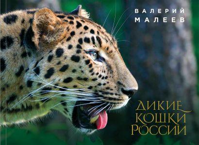 Дикие кошки России: иллюстрированный авторский фотоальбом - фото 1