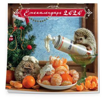 Елена Еремина - Ёжекалендарь (мандаринки). Календарь настенный на 2020 год (300х300 мм) обложка книги