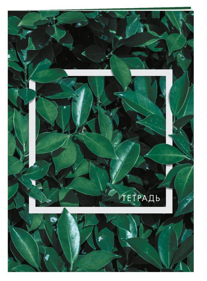 Чайное дерево. Тетрадь общая, А5, 48л., накидка 4 п. полноцвет, гл. пленка