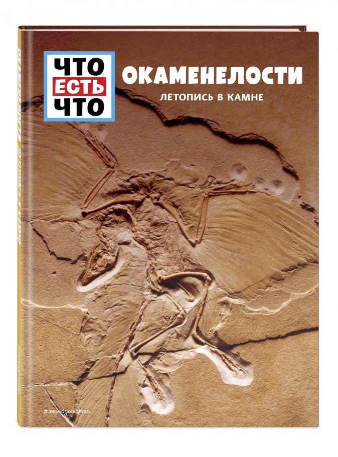Манфред Баур - ОКАМЕНЕЛОСТИ. Летопись в камне обложка книги