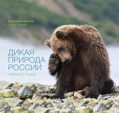 Дикая природа России - фото 1