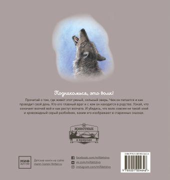 Животные в природе. Волк Ренне